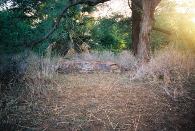 Elsa's grave in Meru