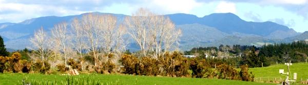 Kaimai Ranges New Zealand