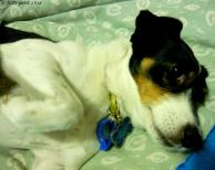 """Chevvy's soulful """"please get up' look"""