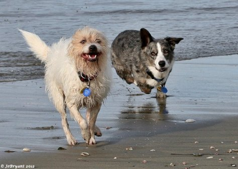 I am not adverse to capturing other people's pets on film either…especially when it includes a trip to my favourite place – the beach.