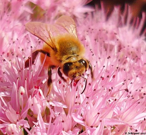 As the summer began to move on I took time to practice macro photography on one of my favourite subjects - bees.