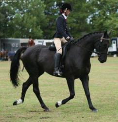 A friend's daughter competing in the dressage.