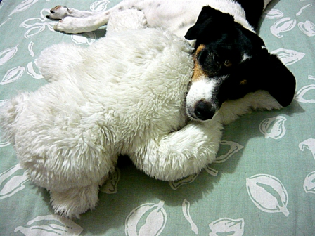 Chevvy with her cuddle friend...Bear !
