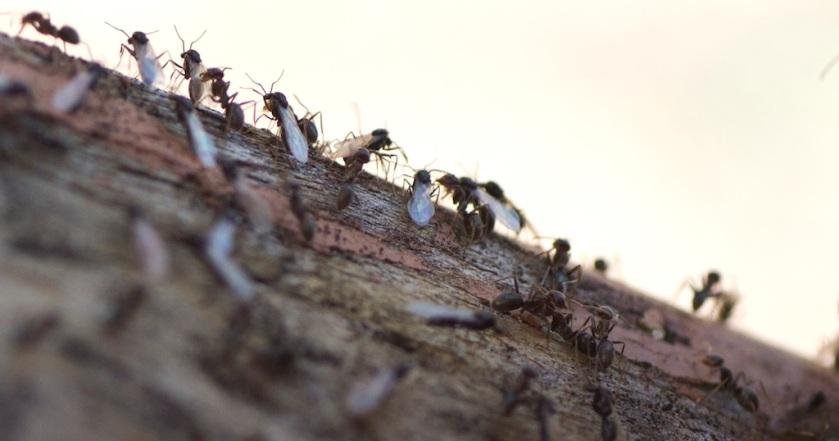 Ants - macro