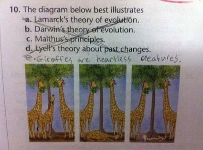 test-answers-that-are-totally-wrong-but-still-genius-12