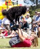 Dogmatic New Zealand