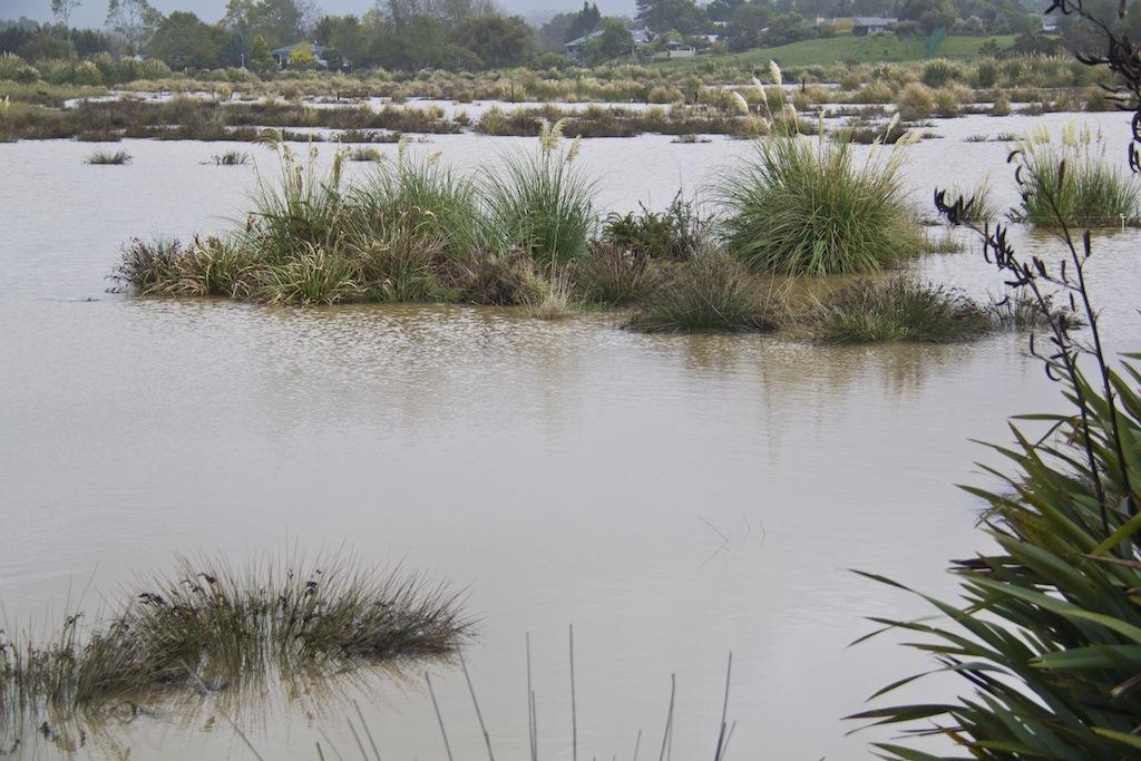 The birds were loving the wetlands