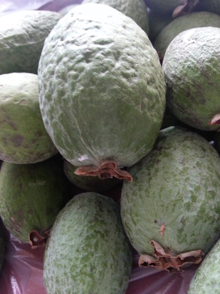 Feijoas ready for feasting & jam making.