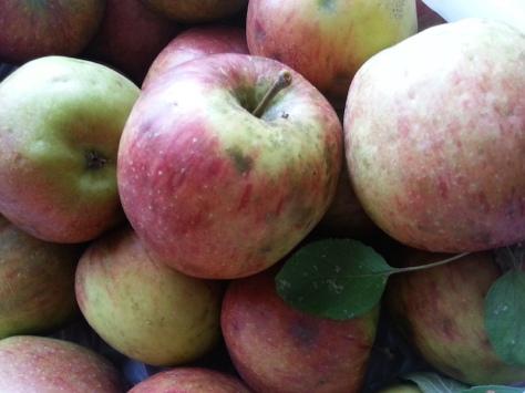 Pesticide free apples.