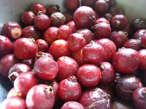 Red Cherry Guavas